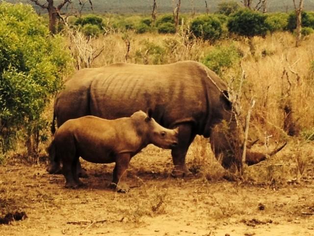Swaziland Adventure