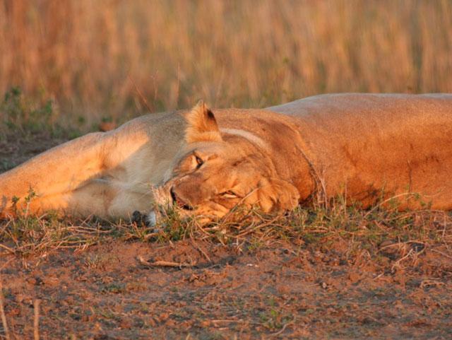 Ventnor Wildlife Weekend –  24th -27th February